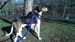 Outdoor hound