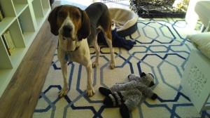 Skinny hound 2