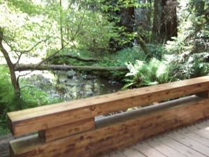 They had several of these really pretty bridges in the Muir Woods park.