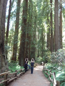 We stretched as tall as we could, to give you an idea of how HUGE these redwood trees are.