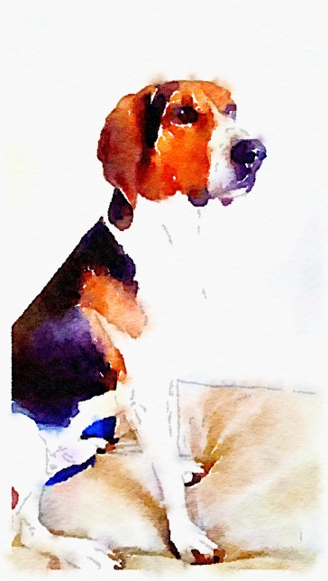 Hound Watercolor